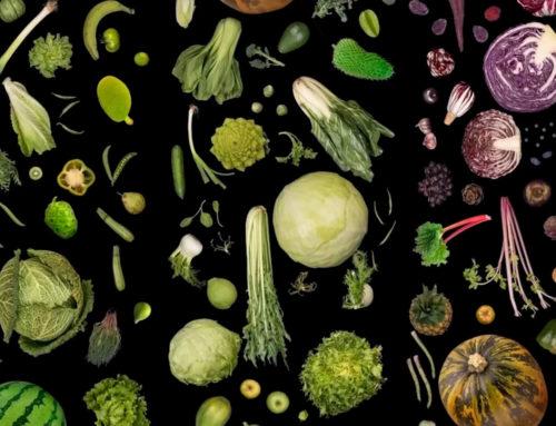 Padiglione Zero – L'addomesticazione vegetale